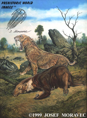 Saber Tooth Cat - Pleistocene period